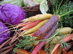carrots_cabbage-250x187